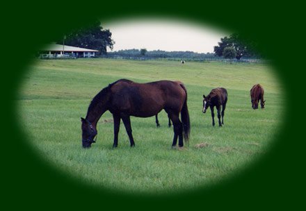 Ocala Horse Farms For Sale